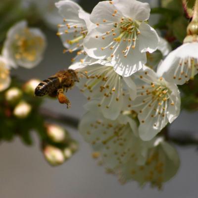 Abeille de la belle de rosult produits fermiere miel