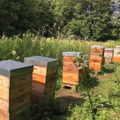 Ruche rosult miel com a la ferme frederic raviat
